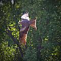 Spreading My Wings by Douglas Barnard
