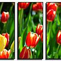 Spring Beauty Triptych Series by Michael Frank Jr