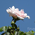 Spring Beginning by Janet Dickinson