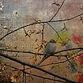 Spring Bird by Todd Hostetter