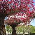 Spring Bloom At The Getty by Caroline Lomeli