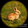 Spring Bunny by Rick  Monyahan