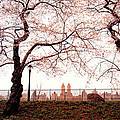 Spring Cherry Blossoms - Central Park Reservoir by Vivienne Gucwa