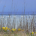 Spring Comes To The Cape by Pamela Patch
