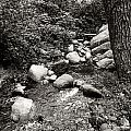 Spring Creek II by Kathleen Grace