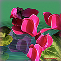Spring Cyclamen by Ericamaxine Price
