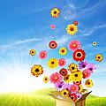 Spring Delivery 2 by Carlos Caetano