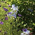 Spring Garden 2 by Kume Bryant