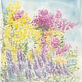 Spring Garden by Jane  See
