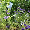 Spring Garden by Kume Bryant