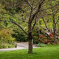 Spring Garden Landscape by Mike Reid