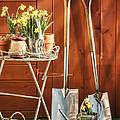 Spring Gardening by Amanda Elwell