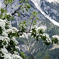 Spring In Alps by Sola Deo Gloria
