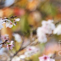 Spring In Autumn by Eena Bo