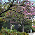 Spring In Bloom At The Japanese Garden by Elaine Plesser