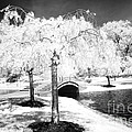 Spring In Infrared by Paul W Faust -  Impressions of Light