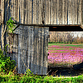 Spring In Kentucky by Larry Braun