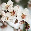 Spring by Masha Batkova