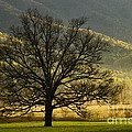 Spring Morning In Cades Cove - D003803a by Daniel Dempster