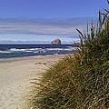 Spring On The Beach  by Elizabeth  Ford