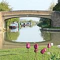 Spring On The Oxford Canal by Linsey Williams