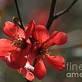 Spring Pop by Living Color Photography Lorraine Lynch
