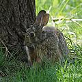 Spring Rabbit by Lori Tordsen