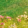 Spring Rain by Darren Fisher