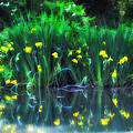 Spring Reflections by Bill Cannon
