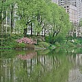 Spring Reflections Of Manhattan In Central Park by Margaret Bobb