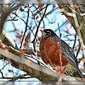 Spring Robin by Debbie Portwood