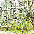 Spring Snow Along Williams River Scenic Byway by Thomas R Fletcher