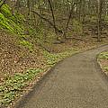 Spring Trail Scene 4 by John Brueske