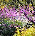 Spring Trees In San Antonio by Carol Groenen