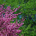 Springtime by Lisa Phillips