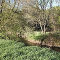Springtime Meadow by Paul Hurtubise