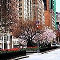 Springtime On Park Avenue by Eric Tressler