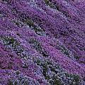 Springtime Phlox Brightens A Roadside by George F. Mobley