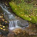 Sprinkle Of Autumn by Idaho Scenic Images Linda Lantzy
