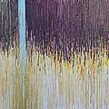 Sprung by Kate Tesch