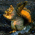Squirrel At Riverfront Park by Ben Upham III