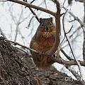 Squirrel Eating In The Frost by Lori Tordsen