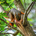 Squirrel by Ester  Rogers