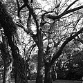 Squirrel Grove by Maria Bonnier-Perez