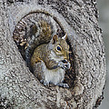 Squirrel In A Knot by Mike Fitzgerald