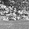 Squirrel In Central Park by Tyler Estes