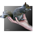 Squirrel In Hand by Brian Wallace