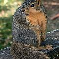Squirrel Looking For A Hand Out by Lori Tordsen