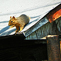 Squirrel On A Hot Tin Roof by Lenore Senior
