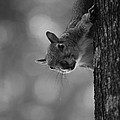 Squirrel On A Tree by Carrie Munoz
